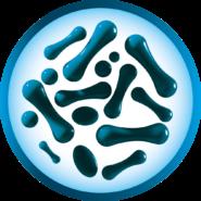Bakterienstämme